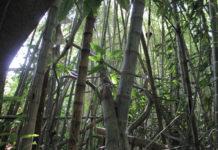 Humedal Ditaires cerca de ser área protegida urbana Itagüí Hoy