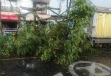 12 árboles caídos y caos vehicular fue el resultado de las fuertes lluvias en Itagüí - Itagüí Hoy