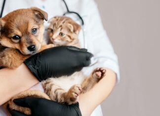 Así puede inscribir a su mascota para la jornada de esterilización en Itagüí - Itagüí Hoy